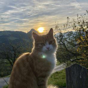 Katze mit Sonnenuntergang